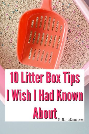 10 Litter Box Tips I Wish I Had Known About - My 3 Little Kittens
