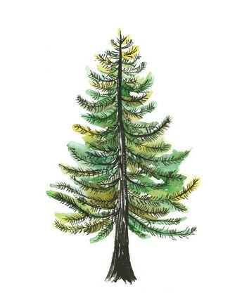 Watercolor Evergreen Tree Art Print - painting, tree, nature, watercolor painting, art print