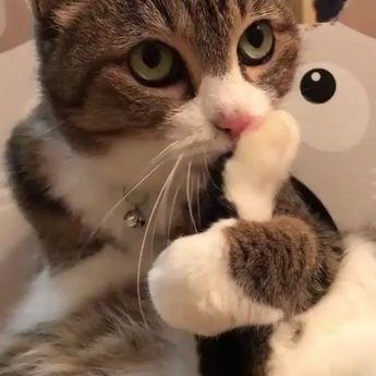 stacat#catsofinstagram#adorable#catlovers#sweetcat#kittens#kitten#kitty