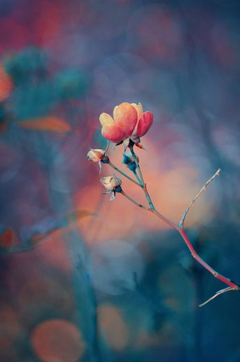 50 Pictures of Pretty Flowers