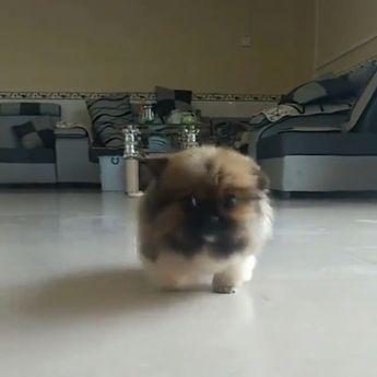 Cutest Cat Moment - Crochetfornovices.com