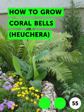 How to Grow Coral Bells (Heuchera)
