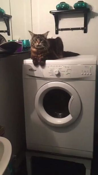 You might be having a bad day but here's a fluffy cat on a washing machine.