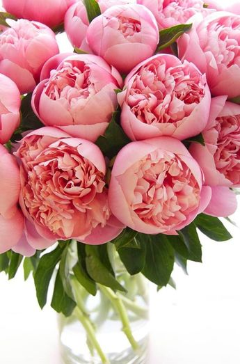 Peonies ~ Michael George Flowers