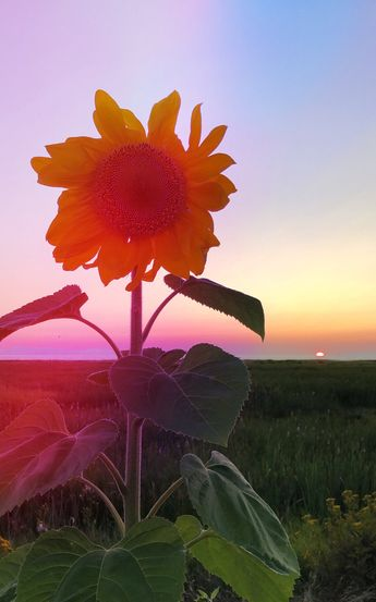 A Summer Hiatus | Poppytalk