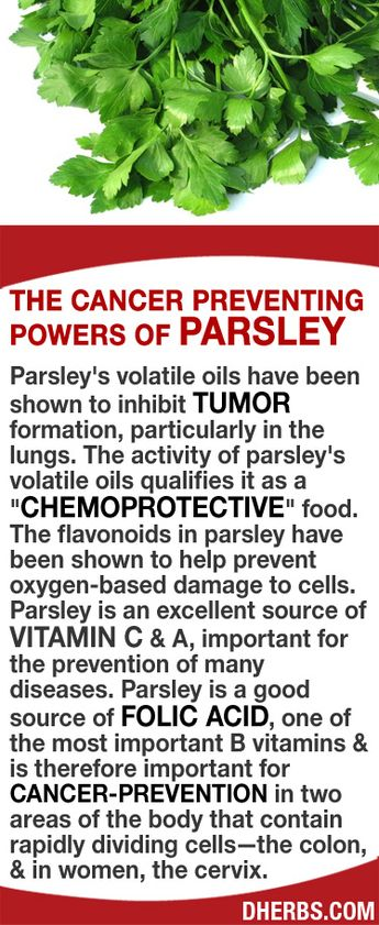 """Parsley's volatile oils help to inhibit tumor formation, particularly in the lungs. The activity of parsley's oils qualifies it as a """"chemoprotective"""" food. The flavonoids in parsley help prevent oxygen-based damage to cells. Parsley is an excellent source of vitamin C & A, important for the prevention of many diseases. It is a good source of folic acid, & is therefore important for cancer-prevention areas of the body that contain rapidly dividing cells—the colon, & the cervix. #dherbs"""