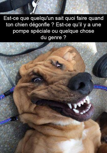 15 photos de chiens avec des sous-titres bien huilés - humour chien, humour animaux, humour web, photo image drôle chien #humour #dog #humor