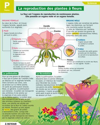 La reproduction des plantes à fleurs