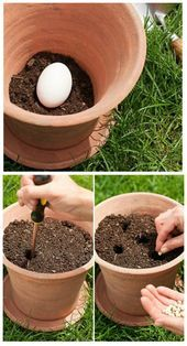 Why do you have to plant a raw egg in your flowerpots