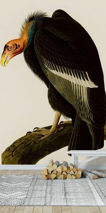 Californian vulture Wall mural