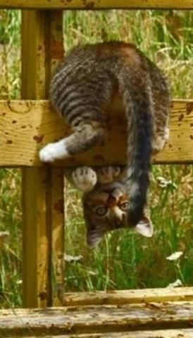 Pick: Funny Inverted Cat Of The Day