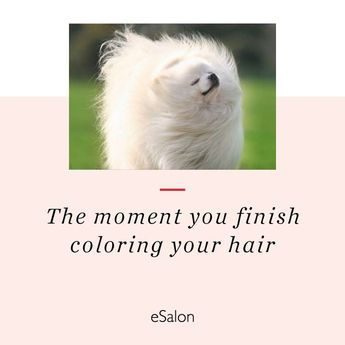 SUCH an amazing feeling! *turns fan on highest setting* #hair #color #meme #funny #colorhappiness #esalon #shampoo #conditioner #hair #funny #color #esalon #colorhappiness  #quotes #memes #funny #beauty #products #hairstylist #keratin #styling #blonde #brunette #redhead #howto