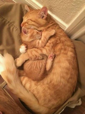 24 Images Of Cats Hugging Other Cats That Will Hug Your Heart