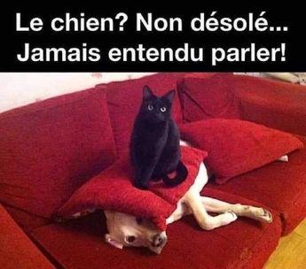 Le chien ? Non désolé... Jamais entendu parler #memes #jokes #sillyjokes