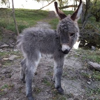 These 156 Cute Baby Donkeys Are Everything You Need To See Today
