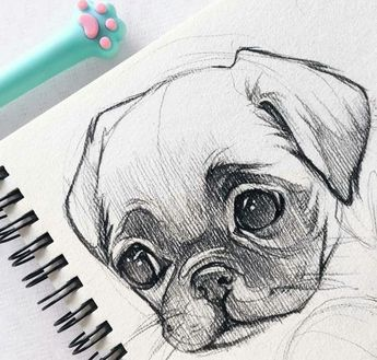 40 Free & Easy Animal Sketch Drawing Ideas & Inspiration