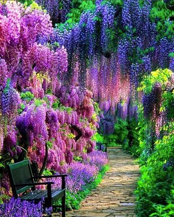 """""""Color is a power which directly influences the soul."""" ~Wassily Kandinsky 🌸Wisteria growing in the Kawachi Gardens of Kitakyushu, Japan via IG @beauteria"""