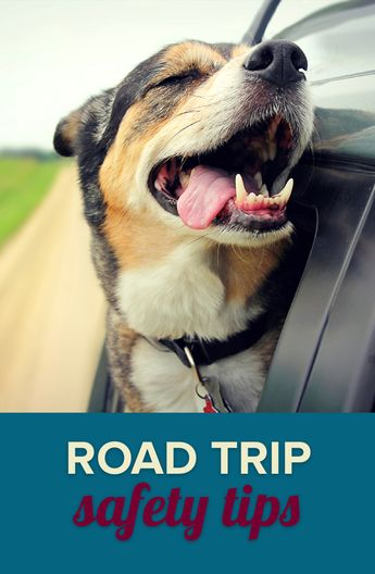 Road Trip Safety Tips | SafeWise