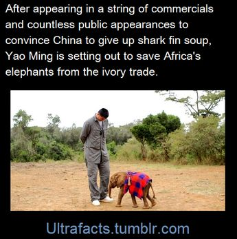Posting because i admire Yao Ming's charitable work, but also because, look at Yao Ming standing next to a baby elephant! he makes the elephant look so tiny!