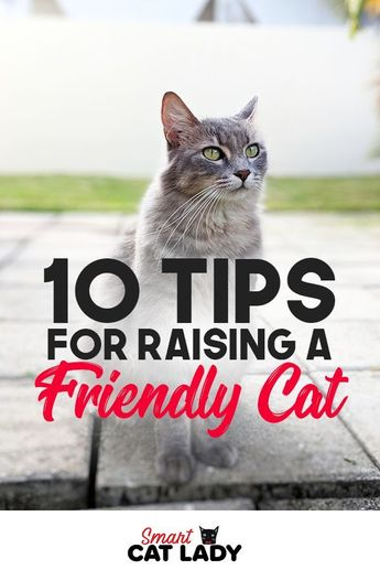 Cats can be aloof but not mean. Want to raise a friendly cat? Check out these cat care tips to raise a nice cat that's not mean. #cat #training #tips #friendlycat #cats