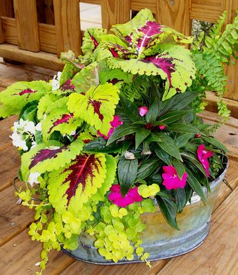 Shade to part shade using coleus, New Guinea impatiens, ferns and creeping Jenny.