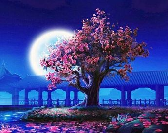 Full Moon Cherry Blossom (LIMITED EDITION)
