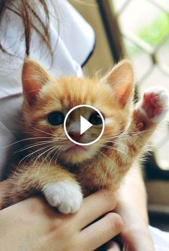 Video Cute Cats and Kittens Doing Funny Things 2019♥ #3 - Funny Cat compilation