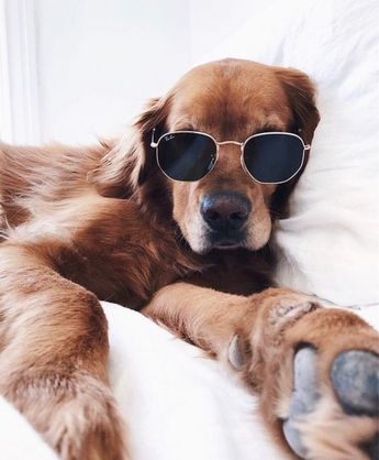6 Ways To Chill With Your Dog On National Relaxation Day