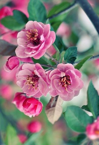 All pink flowers are beautiful and with meanings of their own. So, which do you prefer? Beautiful flowers   small pink flowers   perennial   wallpaper wedding crown garden bouquet light   types of pink flowers   pretty flower such as pink rose, anemone, camellia tulips protea hydrangea dahlia etc