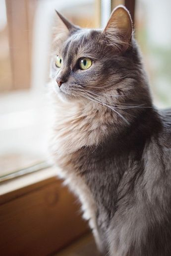 meow.  - 89cats.tumblr.com  via Longing For Spring by Sharizah on Flickr
