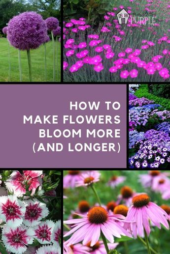 How to make a flower bloom more (and longer)
