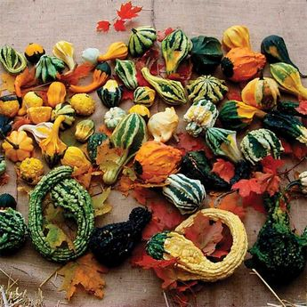 Autumn Wings Blend Gourds - ordered Oct / These unique gourds are produced in many vibrant colors and unusual shapes. All display wings, many are warted. Some are in the shape of 12 inch swans, others may be small spoons, pears, and small to large bottles. Sure attention getters!