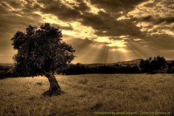 Crete ... 30 million olive trees .. plus one!_4578_ dvd 15 by primo masotti on 500px
