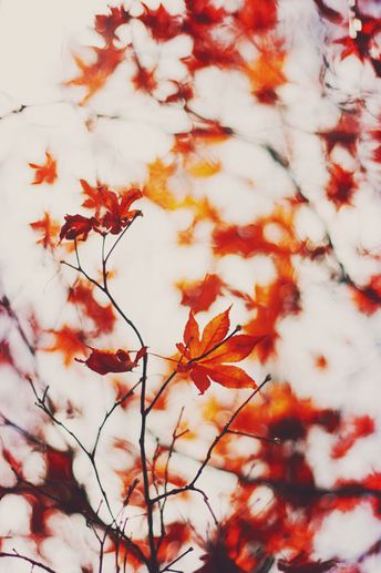 Nature Photography Autumn Decor Orange Wall Art Tree by Kristybee