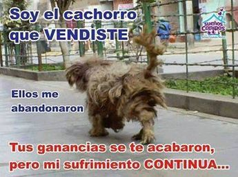 .NI LOS ANIMALES DE RAZA SE SALVAN DEL ABANDONO. BASTA DE MALTRATO!!!