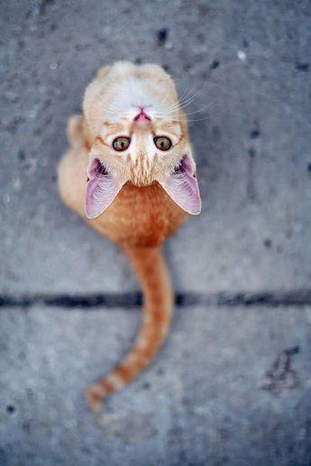 Upside Down Portrait - Sahara