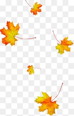 Autumn Maple Leaf, Leaf, Autumn PNG Transparent Image and Clipart for Free Download