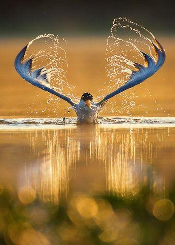 Tern Horns by Syed Hussnain Raza