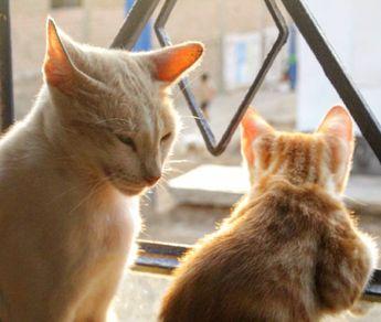 Mami y hijo 🐱🐱 Love cat 🐈🐈🐈 #cats #mom #son #pets #babys #like4like #followme #photography #pic #castagram