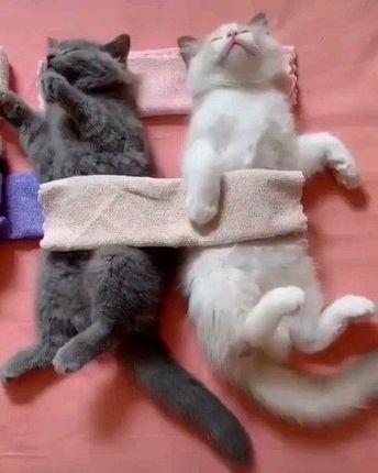 #catvideos