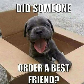 78 Funny Animals Pictures With Captions Will Boo You - Animal Photos With Captions