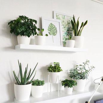 all white: pots & shelves