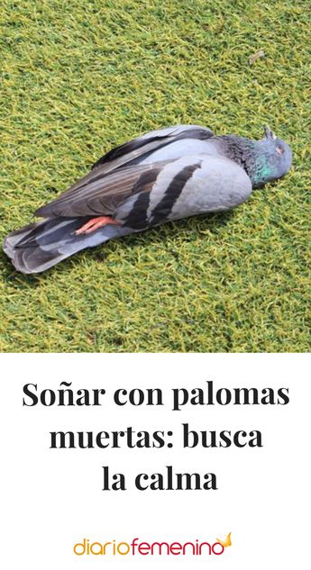 Soñar con palomas muertas: busca la calma