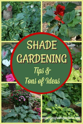 Made In The Shade Gardens (Beautiful Ideas for Your Shade Garden
