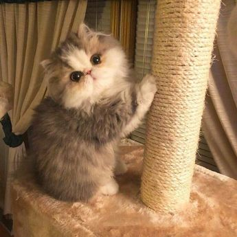 Little ball of fluff Want more cute kittens? Click the photo for more! #catloverscommunity #cats #kittens - stardust