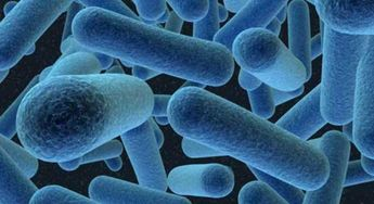 El cuerpo humano tiene más de 10.000 tipos de bacterias