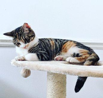 "Maisie Caroline Britney Dalton on Instagram: ""Caturday? #instacat #sascat #kittens #instakitten #kitten #cat #catsofinstagram #kittensofinstagram #catlife #catractive #catoftheday #cute…"""