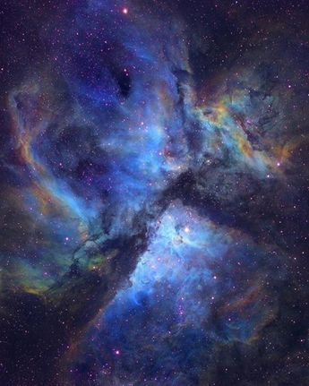 Stargazing Wolf