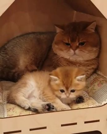 Baby with Daddy  - Cute Cats and Kittens -   #baby #Cats #Cute #Daddy #Kittens #kittyanime