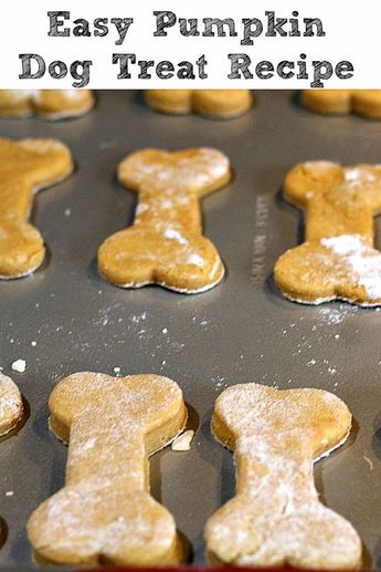 This easy Pumpkin Dog Treat Recipe is perfect to make for your dog! With only four ingredients they are also super quick to whip up a batch. #dogtreats #dog #pumpkin